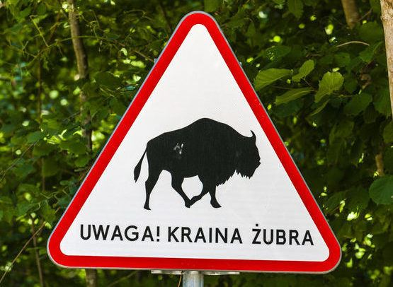 Bialowieza Forest Tour - Meeting with Bisons Bialowieza Forest The Road Sign